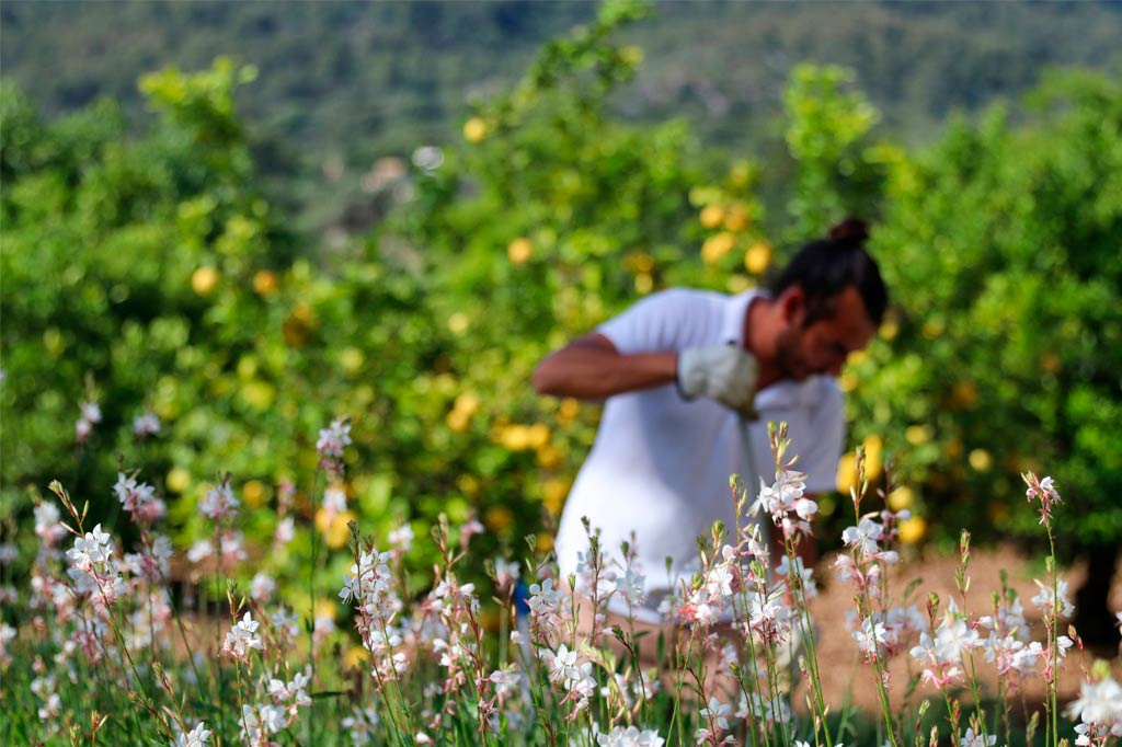 Weinberge Orchard Mallorca Hotel Son Brull
